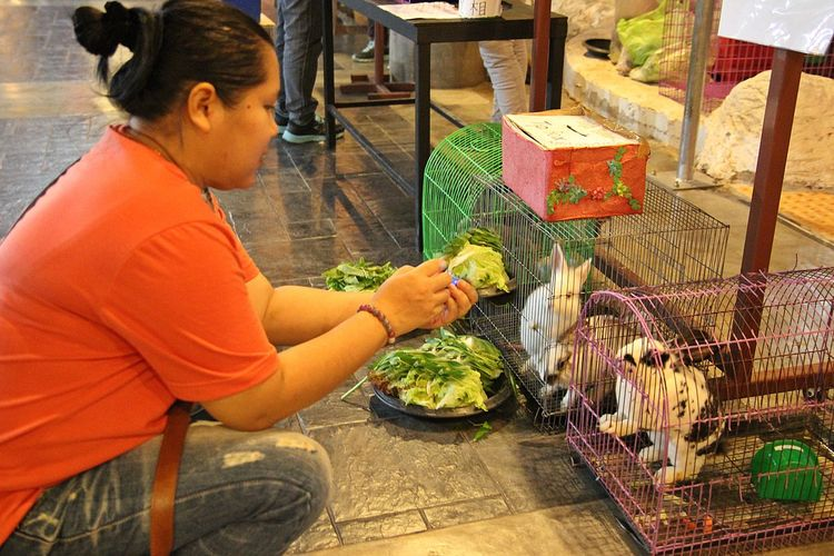 Side view of woman feeding rabbits in cage