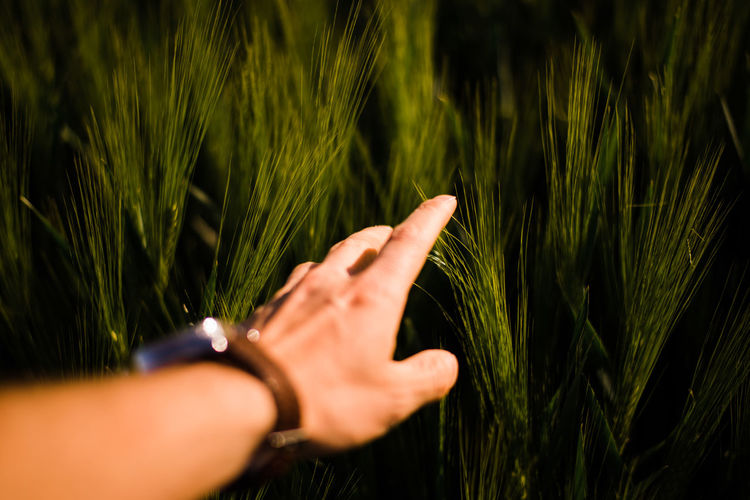 Cropped image of hand touching plant on field