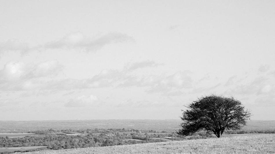 Standing Alone Plant Tree Landscape Field Environment Sky Beauty In Nature Land Scenics - Nature Tranquil Scene Tranquility Nature Day Non-urban Scene Cloud - Sky Growth Outdoors Isolated Loneliness Alone Blackandwhite Black And White