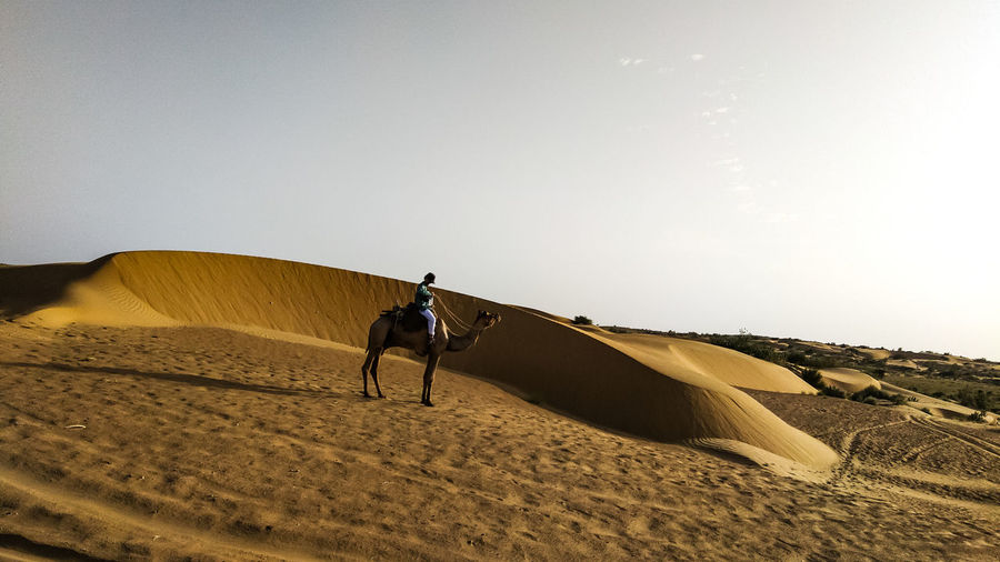 Sand Dune Desert Sand Sky Camel Rajasthan Turban Morocco Indian Subcontinent Egyptian Culture Working Animal Arid Climate Arid Landscape Bridle Saddle Safari Hiker Boat Riding Arid Pyramid HUAWEI Photo Award: After Dark #urbanana: The Urban Playground Be Brave Holiday Moments Moments Of Happiness It's About The Journey