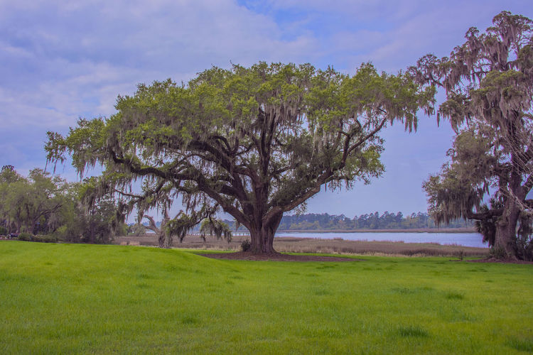 Brays Island Day Grass Landscape Landscape_photography Live Oak Natural Parkland Nature No People Outdoors Scenics Sky Tourism Tree