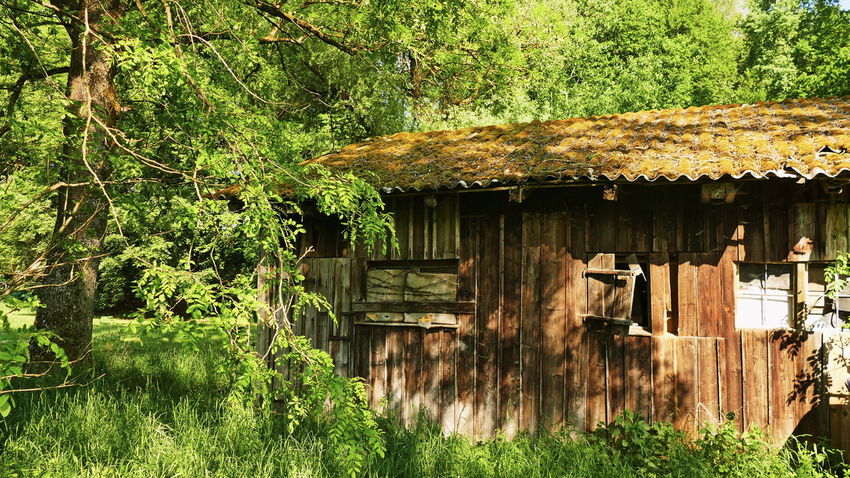 Barn Abandoned Architecture Building Building Exterior Built Structure Cottage Day Forest Green Color Growth House Land Landscape Nature No People Old Old House Outdoors Plant Roof Tree Wood - Material
