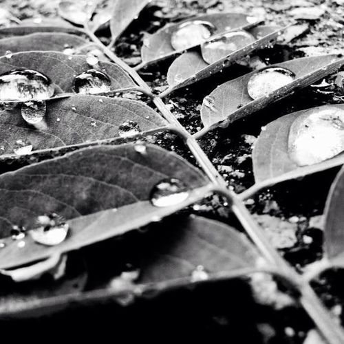 Sometimes real beauty is right in front of you! Nature IPhone Artist Dew Dewdrops Morning Dew Deep Thoughts