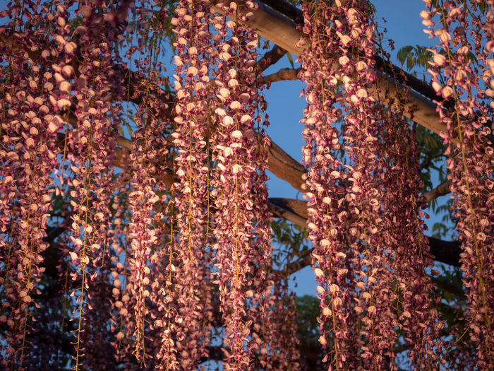 Low angle view of flowering plant hanging from rusty metal