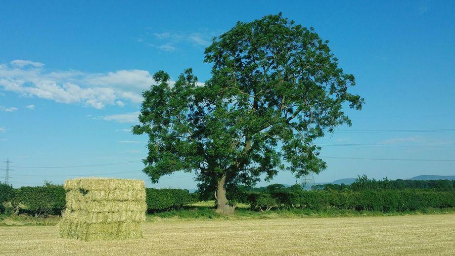 Haybales  Tree