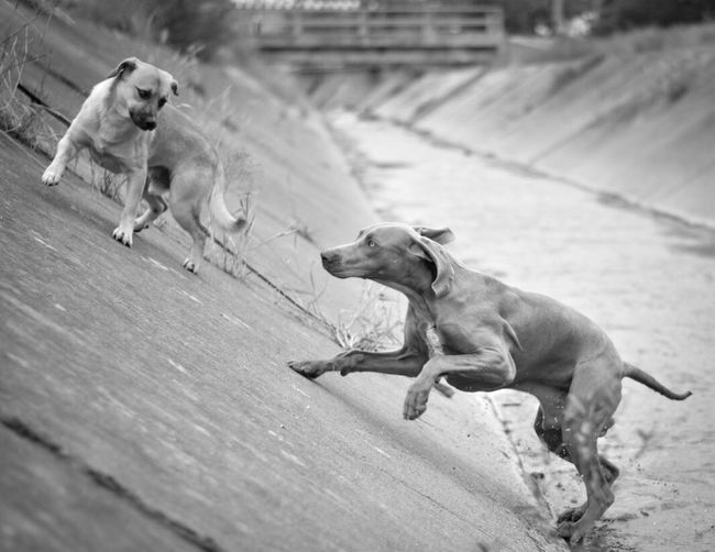 Animales Perros  Mascotas Dog Canine Mammal Domestic Pets Vertebrate One Animal Domestic Animals Day Focus On Foreground Full Length