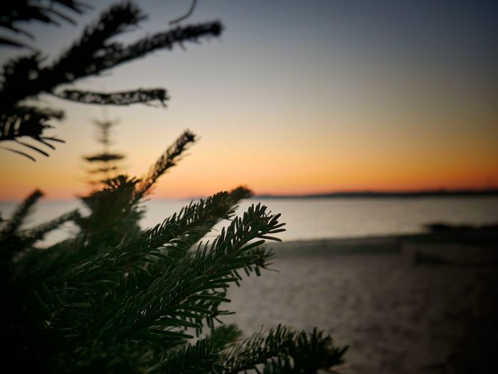 Sunset Nature Beauty In Nature Sea Tranquility Sky Scenics Water Close-up Growth No People Outdoors Horizon Over Water Tree Day Shades Of Winter