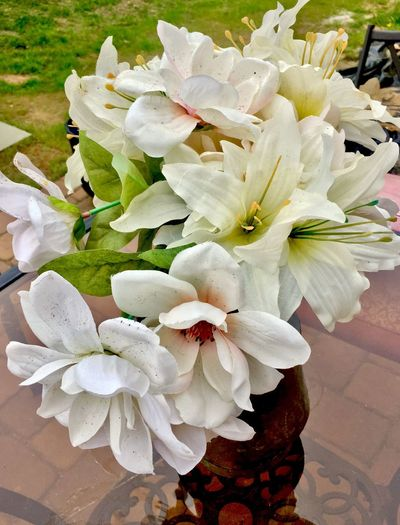 Flower Petal Beauty In Nature Nature White Color Plant Flower Head Fragility Growth Freshness No People Close-up Outdoors Day Blooming