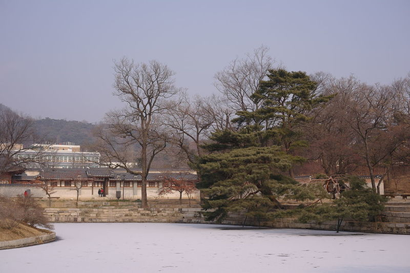 Park near president residence Tree Architecture Building Exterior Winter Built Structure Cold Temperature Building Beauty In Nature Outdoors