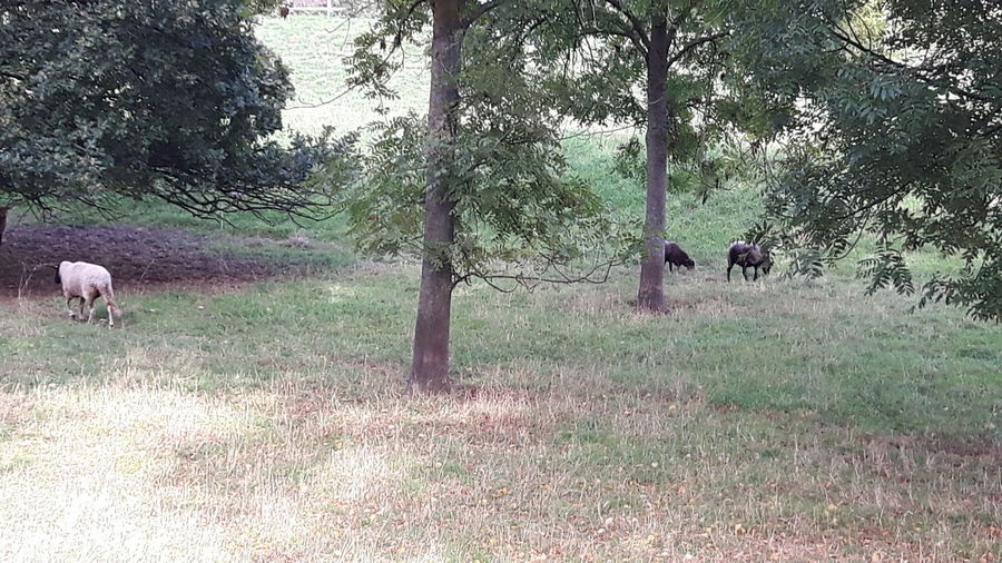 Tree Pets Dog Field Rural Scene Grass Sky Livestock