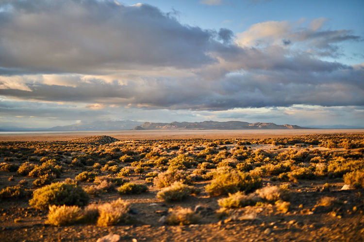 Cloud - Sky Scenics - Nature Landscape Environment Sky Beauty In Nature Tranquil Scene Tranquility Land Nature Non-urban Scene No People Desert Field Remote Horizon Over Land Plant Idyllic Horizon Day Outdoors Arid Climate Climate Semi-arid
