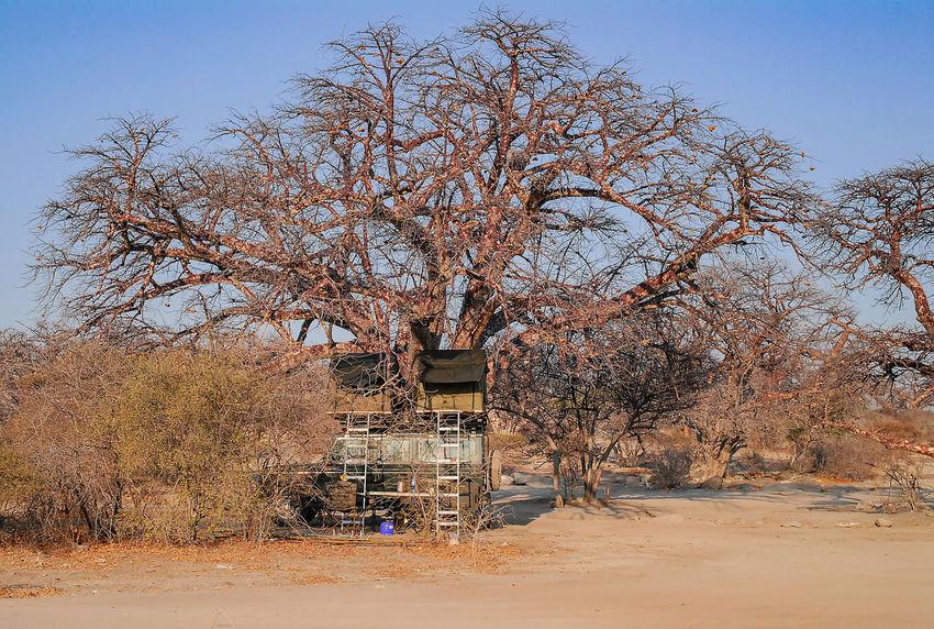 Baobab Tree in the savannah of Etosha National Park Baobab African Baobab Tree Adansonia Africa Country Rock Rock Desert Etosha National Park Mountains Safari Sahara Namibia South Africa Etosha Pan Salt Basin Okaukuejo Waterholes Savannah Semi-desert Hilly Red-brown Earth Galton Gate Dolomite