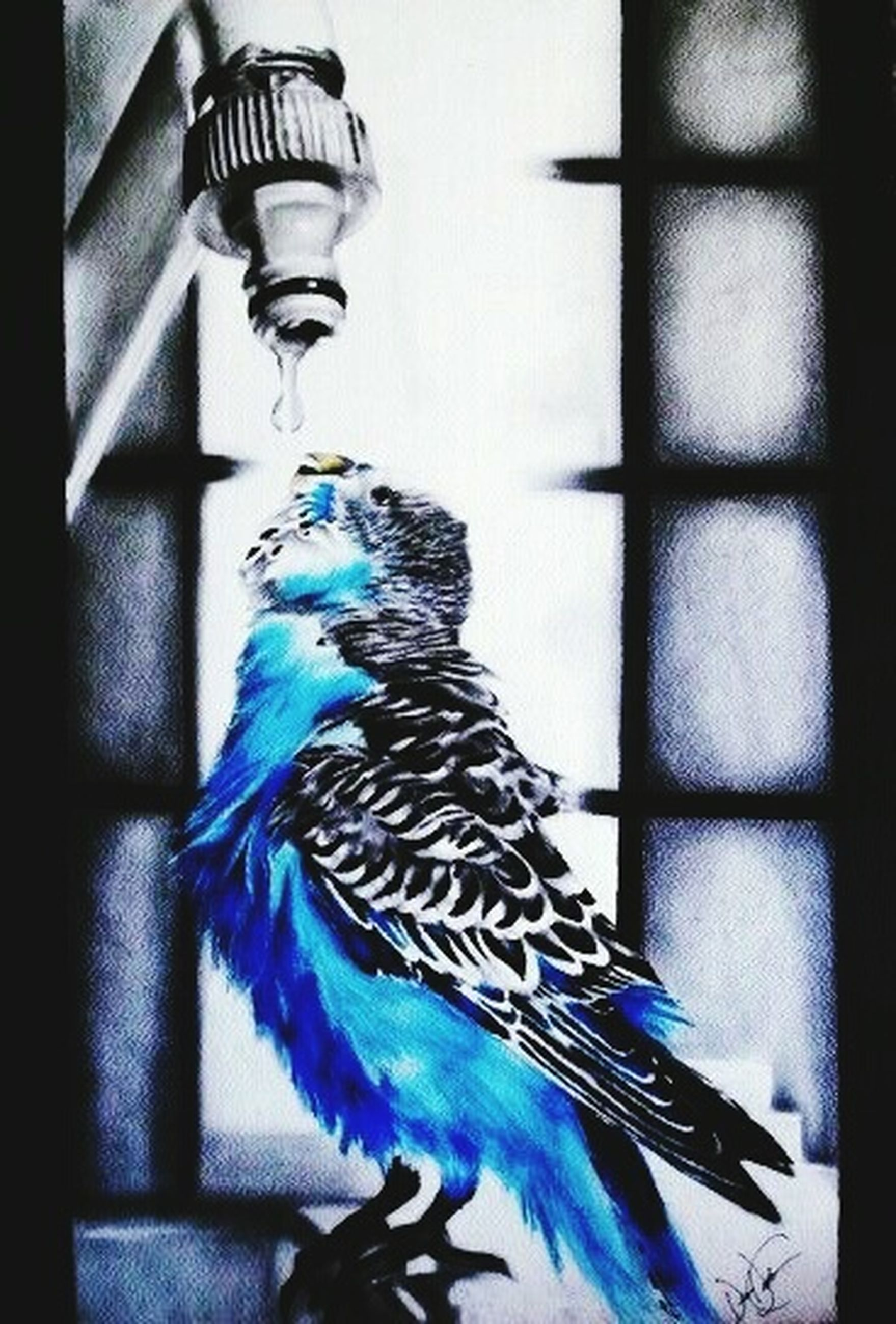 indoors, blue, art and craft, animal themes, one animal, no people, built structure, lighting equipment, architecture, close-up, illuminated, decoration, bird, low angle view, art, focus on foreground, pattern, glass - material, creativity, wall - building feature