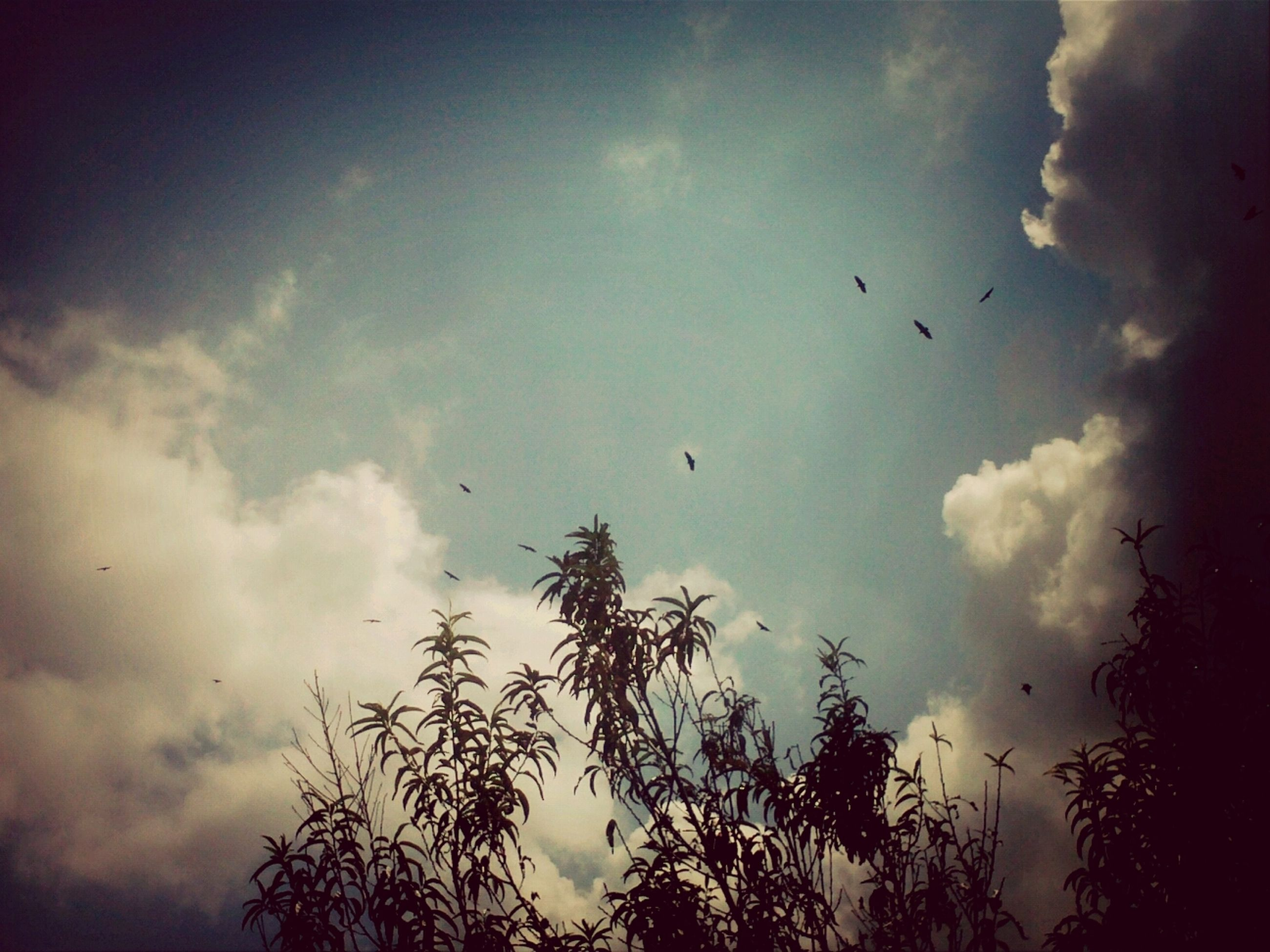 bird, animal themes, flying, animals in the wild, sky, wildlife, low angle view, flock of birds, cloud - sky, silhouette, nature, tree, beauty in nature, cloudy, cloud, mid-air, tranquility, scenics, outdoors