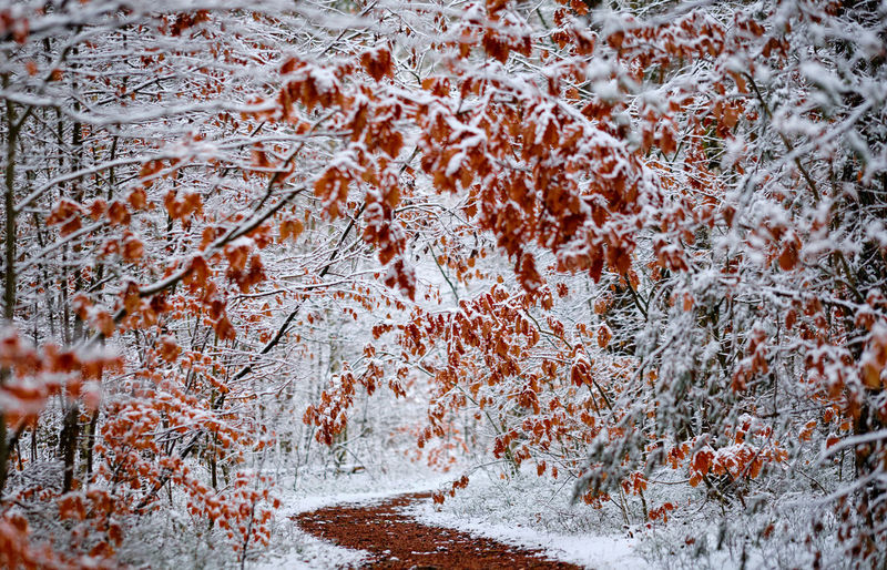 Beautiful footpath through the snow covered forest with some aumunly colored leaves Water Nature Tree Winter Autumn Snow Day Frozen Outdoors Tranquility Change Plant Flowing Water Pathway Growth Branch Blizzard Close-up Beauty In Nature No People Backgrounds Full Frame Orange Color Brown Color Cold Temperature