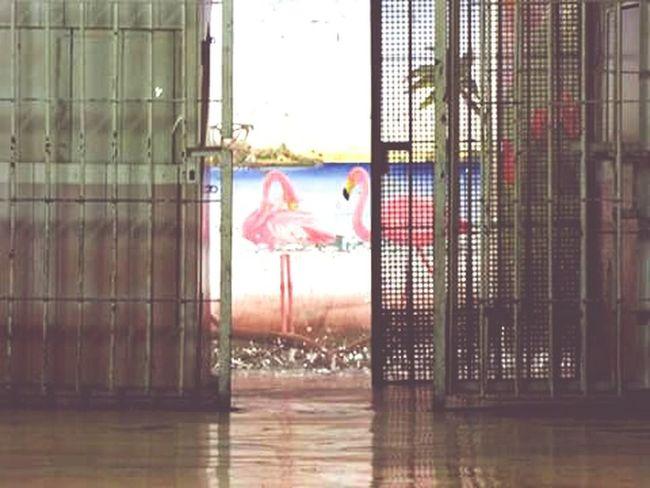 Flamigos Bird Expenalgarciamoreno Hall Prision Prisioners Ecuador Quito SanRoque EyeEm EyeEm Gallery Reflection Barriosviejos History Ecuadorian Magnumphotos Ecuadoramalavida Streetphotography Eyeemphotography Personal Perspective Burnoutart Composition