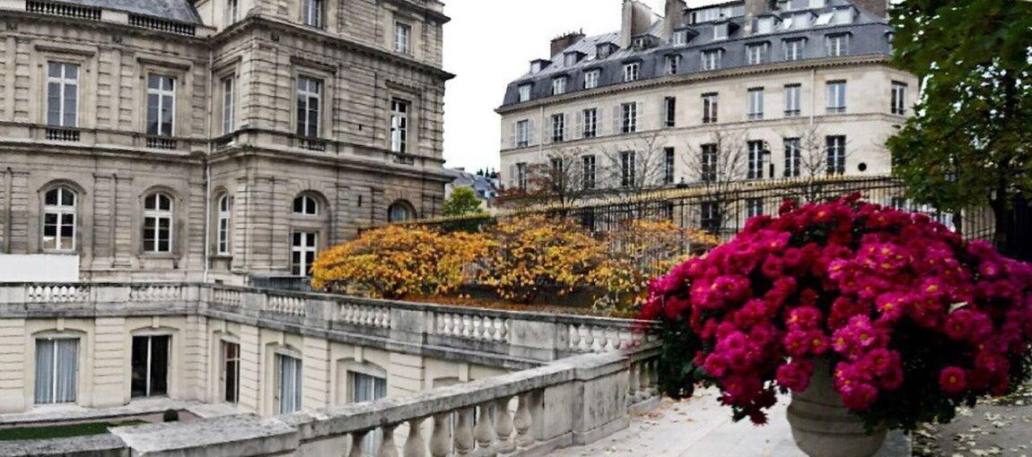 Autumn in Paris. Good morning my friends ☕️? !! Tadaa Community Colors Of Autumn Paris