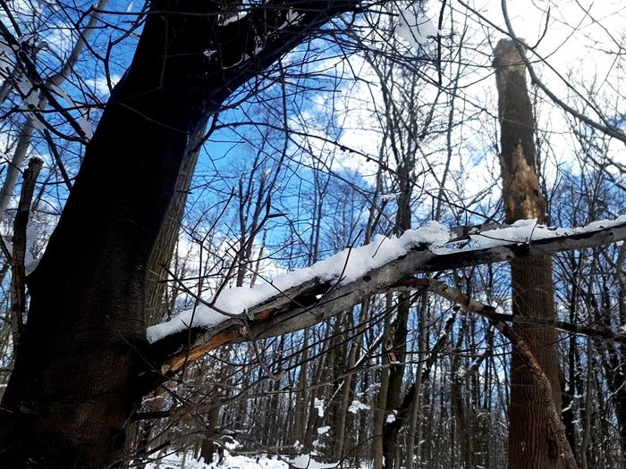 Tree Branch Bare Tree Forest Tree Trunk Sky