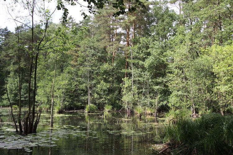 Brandenburg EyeEm Nature Lover EyeEm Gallery EyeEmNewHere Putlitz Beauty In Nature Forest Lake Moorland Nature Prignitz Suny Day