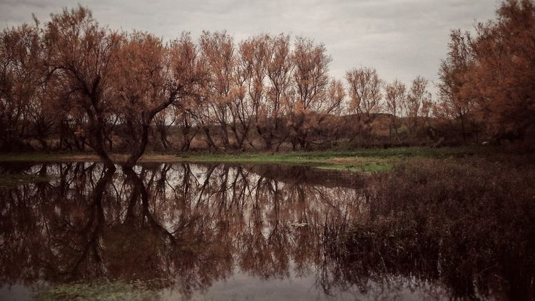 Reflections Winter Puglia Italy Tree Nature Reflection Tranquility Beauty In Nature Tranquil Scene Scenics Water Outdoors No People Day Sky Forest Landscape Growth