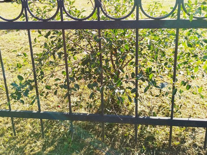 Close-up of metal fence on field