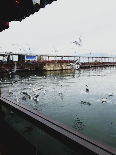 Doğa Duman Sevmek Aşk Huzur Hello Water Sea Bird Day No People Sky Nature Beach First Eyeem Photo Mobility In Mega Cities