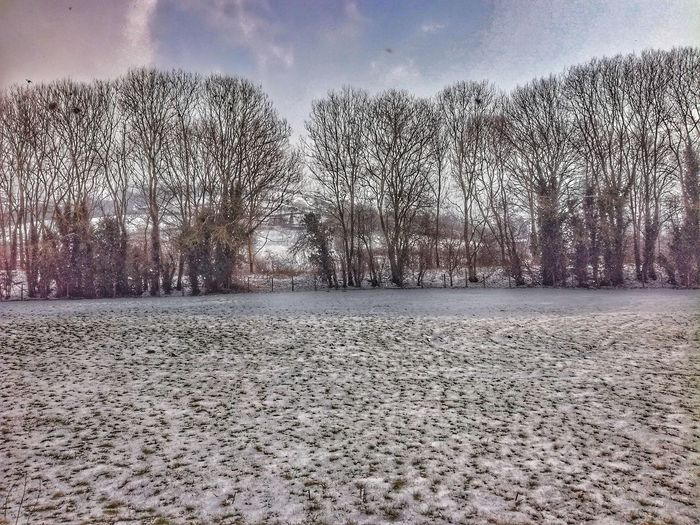 Newlands..... New Starts Landscape Snow Covered Winter My New View Snow Day Cold Temperature -9 White Background Snow ❄ Treelined Trees Tree Rooks Rookery Field Newstart Adventures Winter Sky Snow Covered Snowcapped Weather Condition White Snow Tranquil Scene