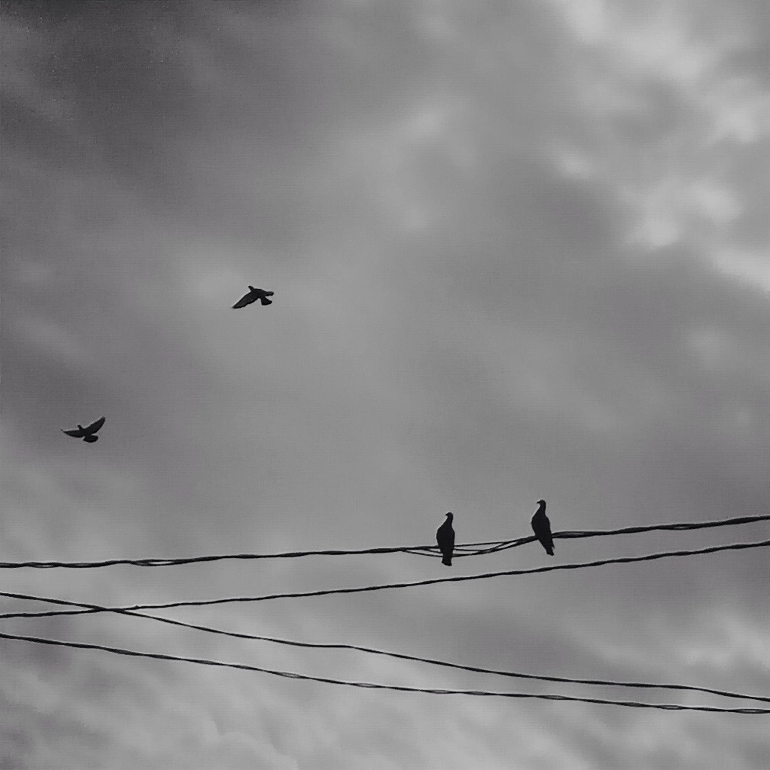 bird, animal themes, low angle view, animals in the wild, wildlife, flying, silhouette, sky, perching, power line, cable, connection, cloud - sky, avian, two animals, flock of birds, medium group of animals, nature, cloud