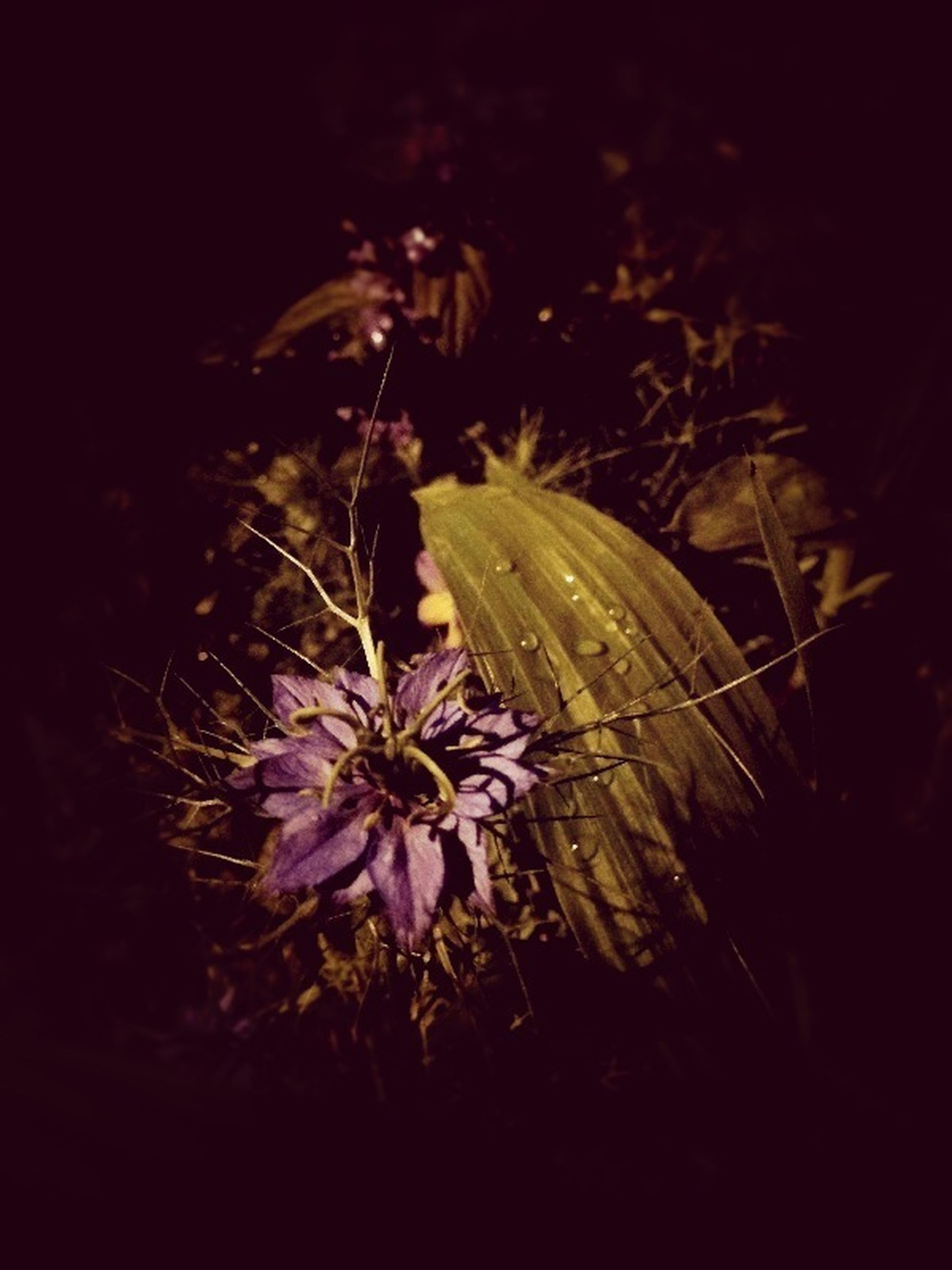 flower, freshness, fragility, growth, petal, flower head, beauty in nature, plant, nature, blooming, close-up, in bloom, single flower, night, focus on foreground, field, blossom, outdoors, stem, botany