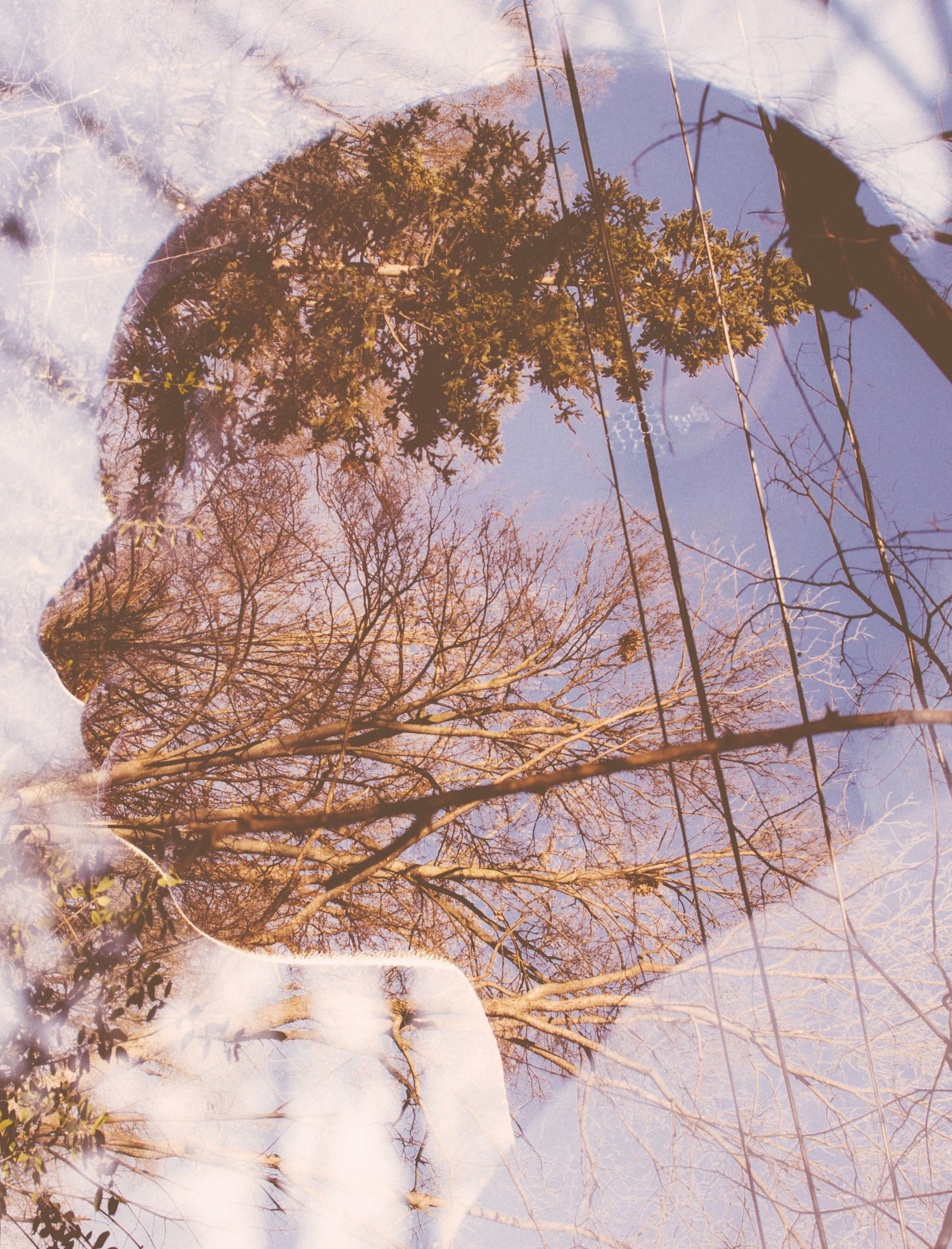 reflection, water, tree, day, nature, sky, outdoors, growth, puddle, no people, tranquility, close-up, plant, built structure, leaf, low angle view, branch, sunlight, season, lake