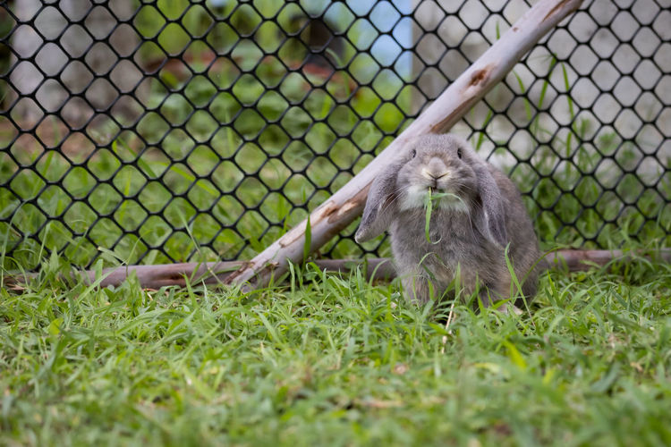 View of monkey on field seen through chainlink fence