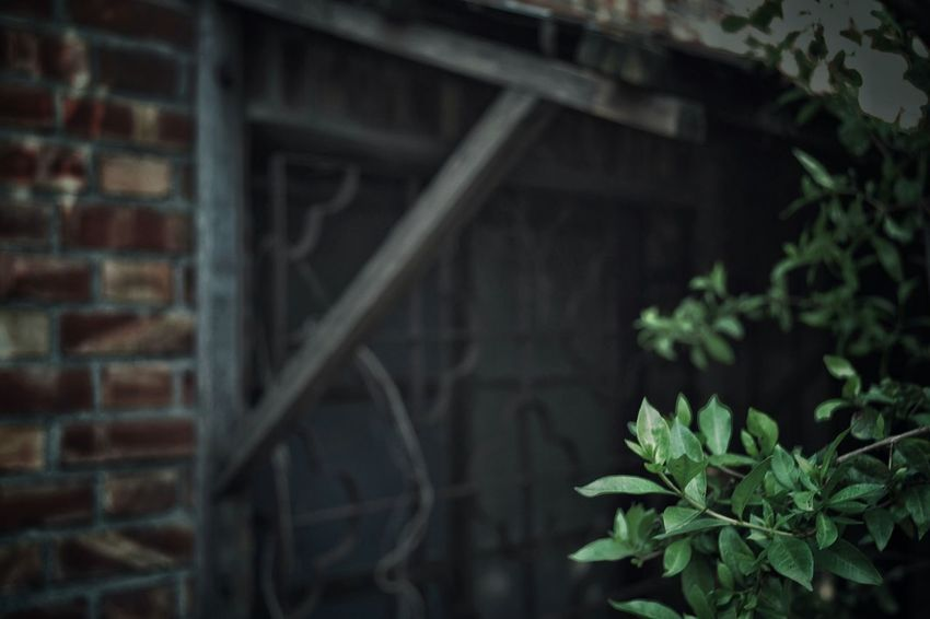 Old Town Old Street Alley Old Red Brick House Afternoon Sunshine Light And Shadow Quiet Moments Bokeh Old-fashioned Flower Motif-Window Leaves From My Point Of View Still Life Street Photography Streetphotography Nostalgic Landscape No Pepole 窓萌 Eye4photography  2016.03.30 專)yuna's 鹿港記錄 at鹿港老街 in 彰化zhang hua, Taiwan