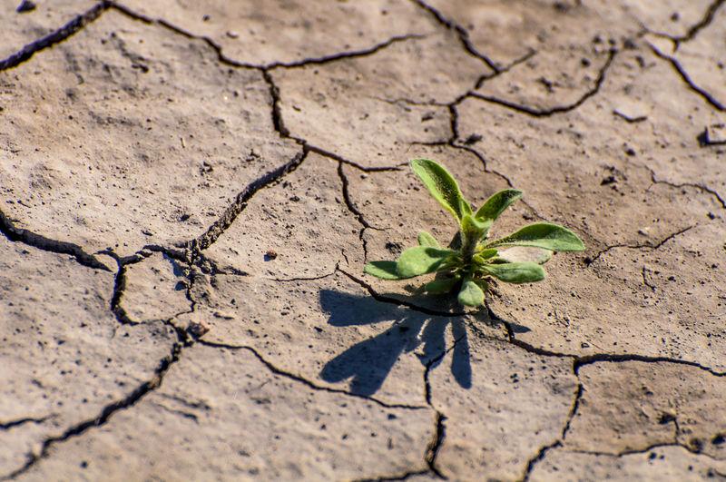 Ciudad Abando Ciudad Fantasma Destrucción De La Naturalez Destruction In Nature Earth Ecology Ecología Historia De Una Ciudad Fan Naturaleza Tierra