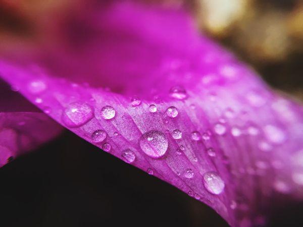 Macro Macro_collection Macroclique Nature EyeEm Nature Lover Nature_collection Drops Rain Drops Naturelovers Flowers
