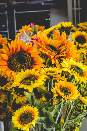 Sunflowers at a Florist Abundance Beauty In Nature Blooming Blossom Botany Close-up Day Florist Flower Flower Head Focus On Foreground Fragility Freshness Growth In Bloom Nature Orange Flowers Petal Plant 43 Golden Moments Golden Fine Art Photography Sunflower Yellow Yellow Flowers