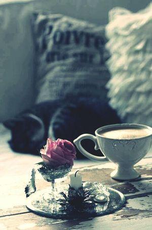 Good Morning✌♥ Morning Coffe Sleeping Cat Its A Beautiful Day