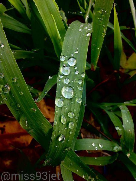 Precision Precise Perfect Rain Drops