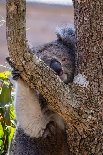 Close-up of lizard sleeping on tree trunk
