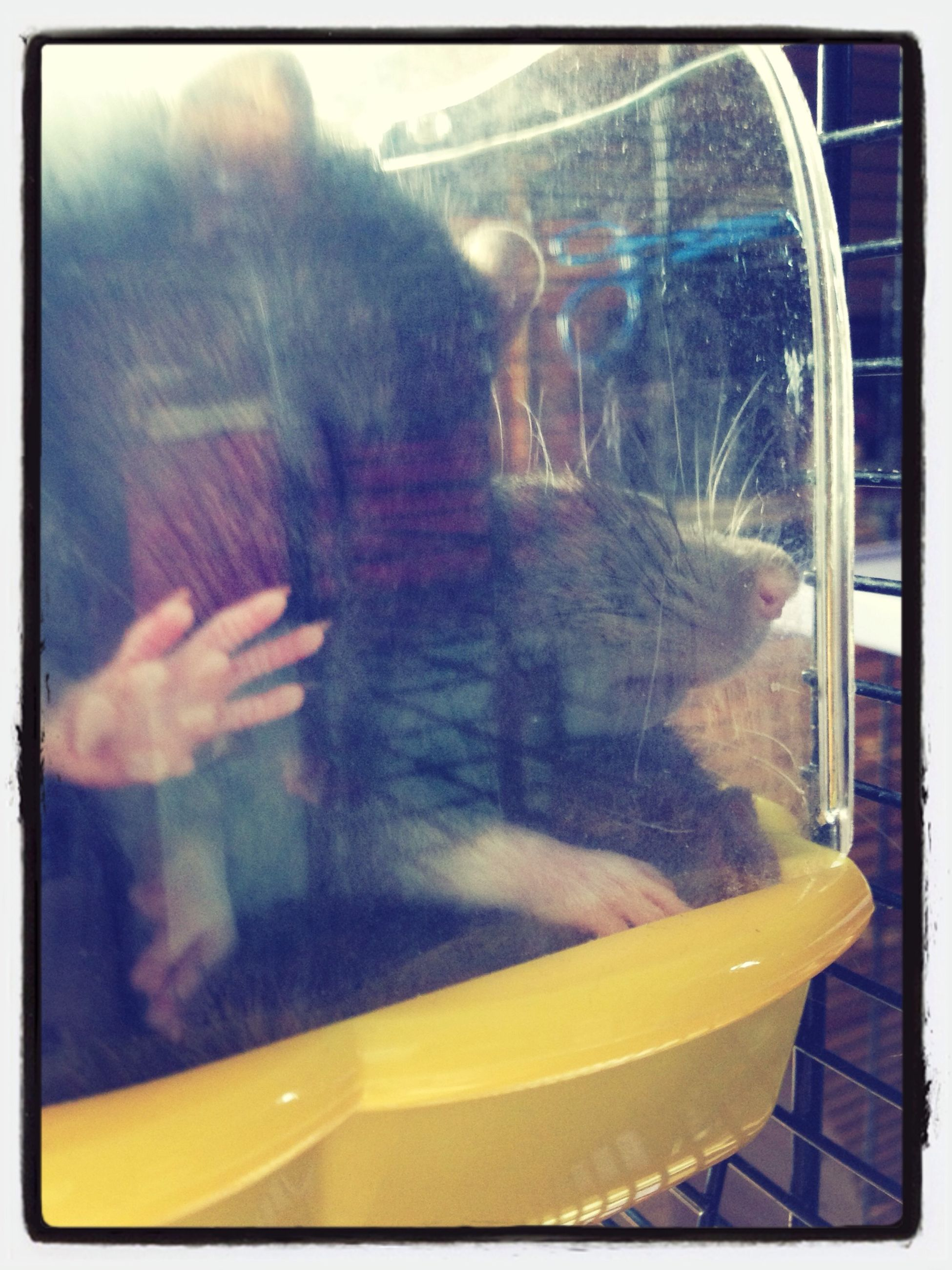 transfer print, glass - material, transportation, mode of transport, auto post production filter, transparent, yellow, car, reflection, window, travel, land vehicle, water, vehicle interior, close-up, indoors, motion, glass
