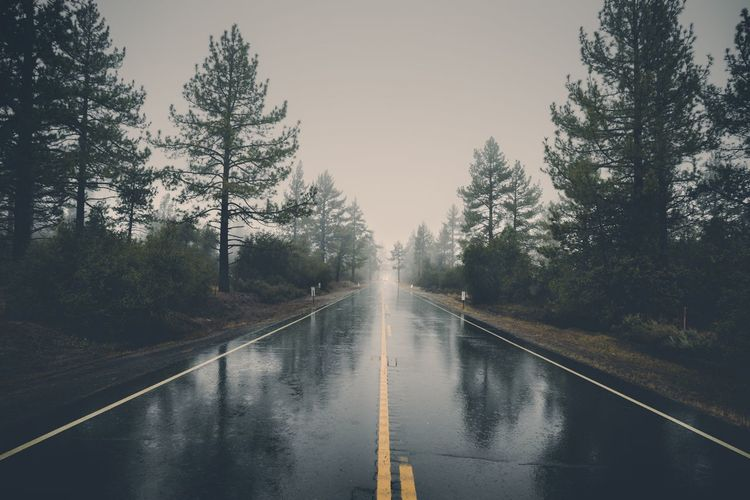 Wet road amidst trees against sky during rainy season