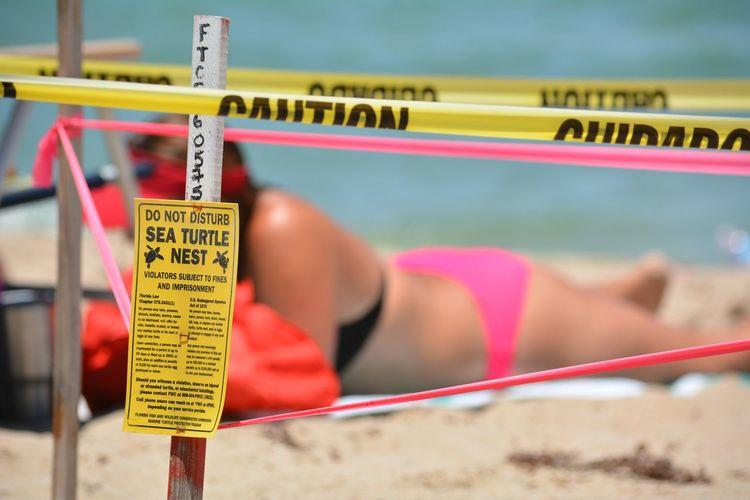 Fort lauderdale beach during sea turtle nesting season