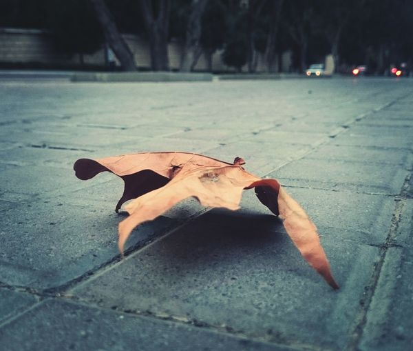🍁Dry&lonely Leaf 🍂Fall2015 Fall/autumn Streetphoto Fall In Baku