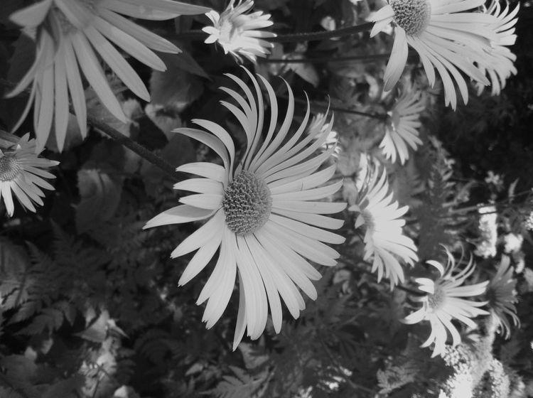 EyeEm Best Shots - Black + White Black And White EyeEm Best Shots Nature