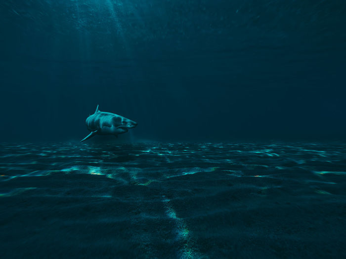 View Of Shark Swimming In Sea