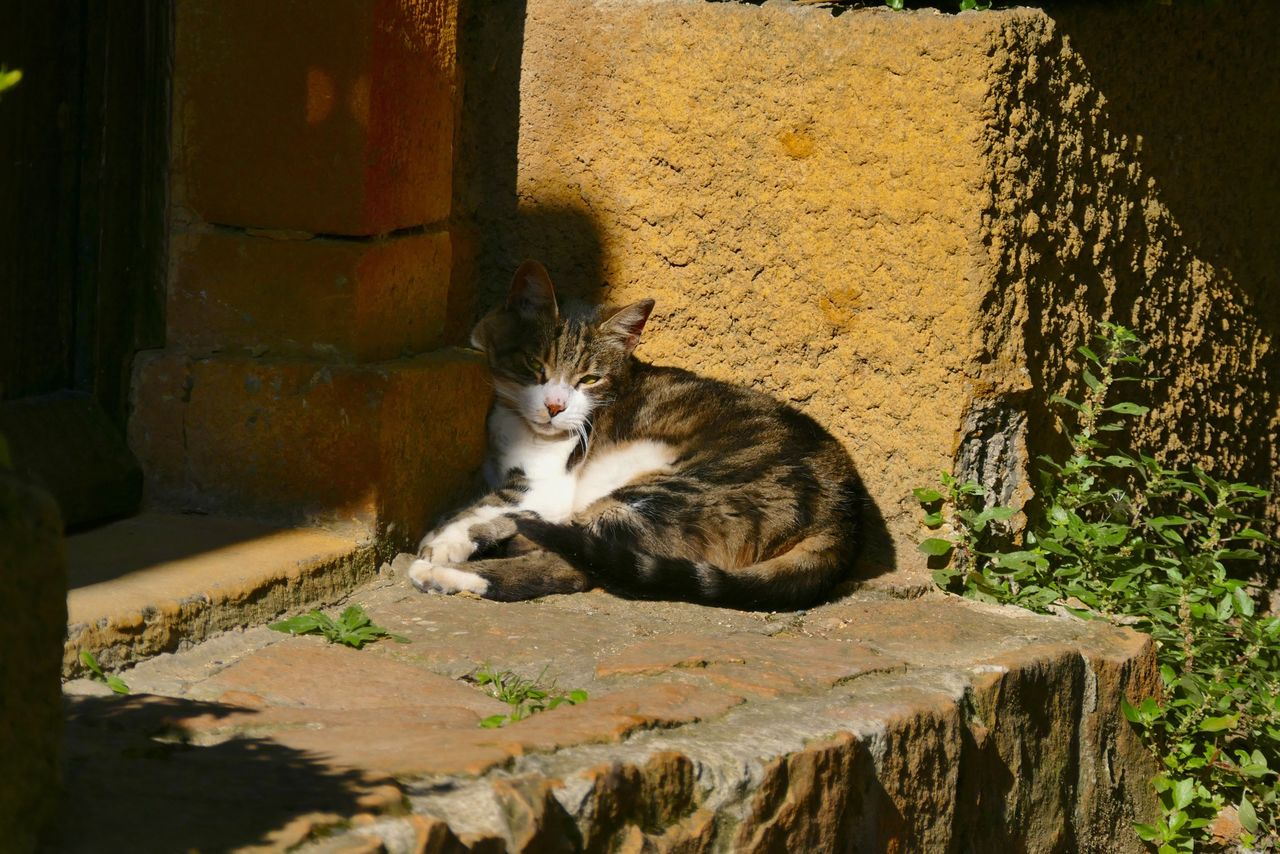 Cat Sitting Outside House