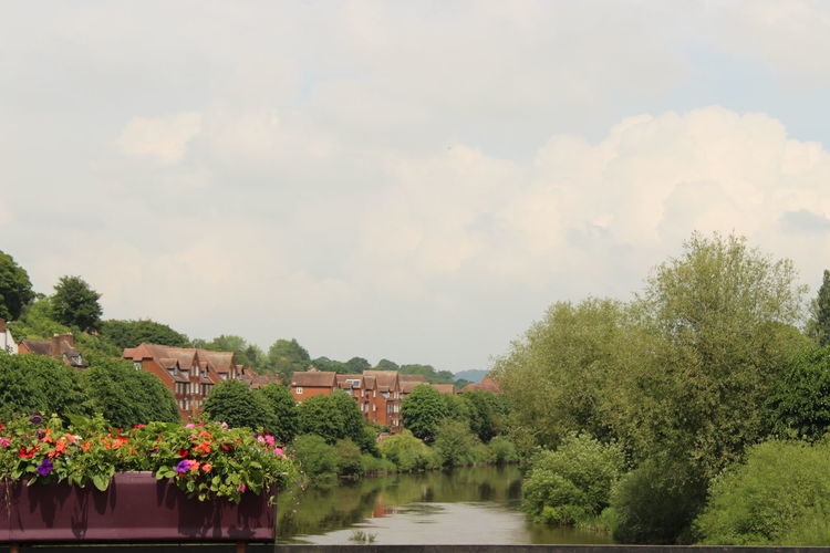 Beauty In Nature Bridgnorth Flowering Plant Nature No People Plant River Waterfront