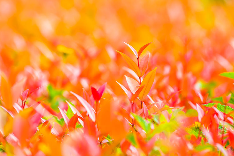 Selective Focus Orange Color Backgrounds Growth Full Frame Freshness Flowering Plant Beauty In Nature Flower Petal No People Flower Head Vulnerability  Close-up Fragility Yellow Plant Part Softness Flowerbed Brightly Lit Plant Nature Day Outdoors