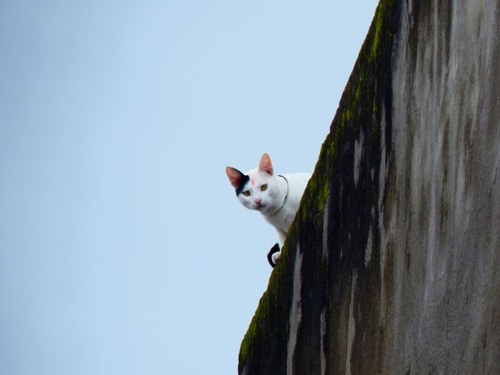 Low angle view of a cat