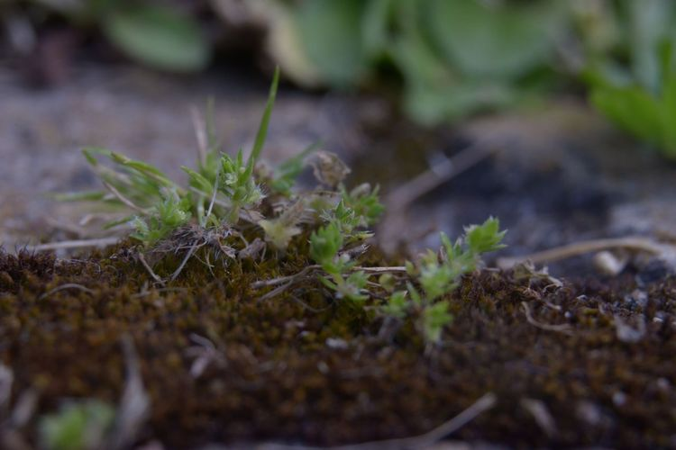 Jurassic moss Growth Plant Selective Focus Nature Green Color Close-up Outdoors No People Moss Beauty In Nature Day Fragility Grass Freshness