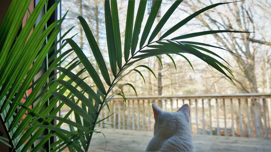 A watchful eye Cat Domestic Pets Mammal Animal Themes Animal Domestic Animals Feline Domestic Cat One Animal Vertebrate Plant No People Growth Nature Day Tree Leaf Focus On Foreground Plant Part Whisker Palm Leaf Kitten Frond Adult Animal At Home Alertness
